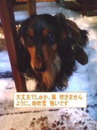 Gentayuki1_2