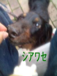 Shiya