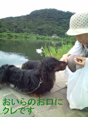 Hakycho