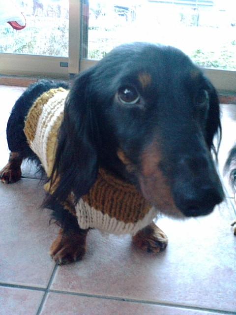 セーター大好きハント
